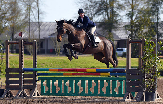 Rider in the jumping arena, Horse
