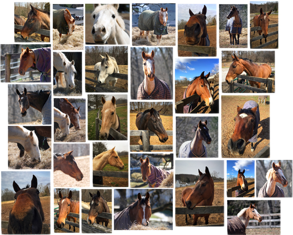 photo collage of horses